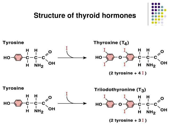Structure of thyroid hormones