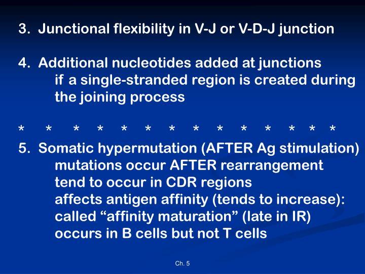 3.  Junctional flexibility in V-J or V-D-J junction