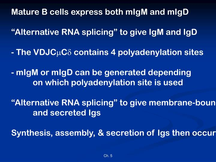 Mature B cells express both mIgM and mIgD