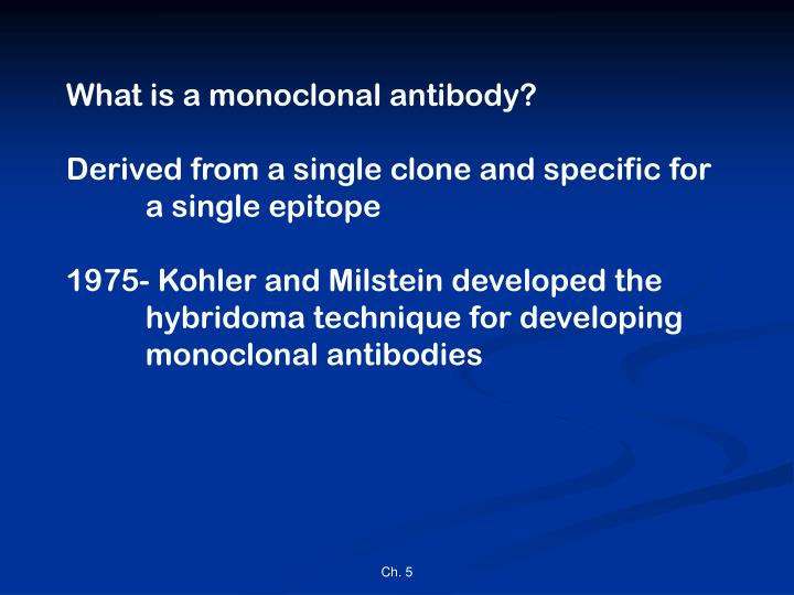 What is a monoclonal antibody?