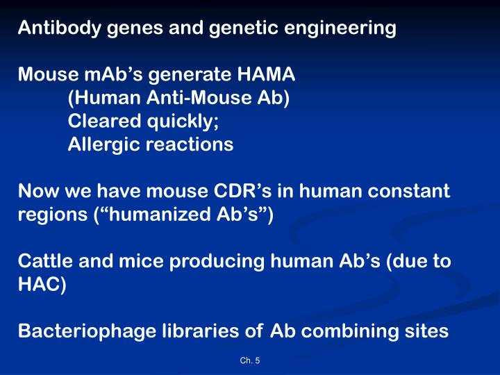 Antibody genes and genetic engineering