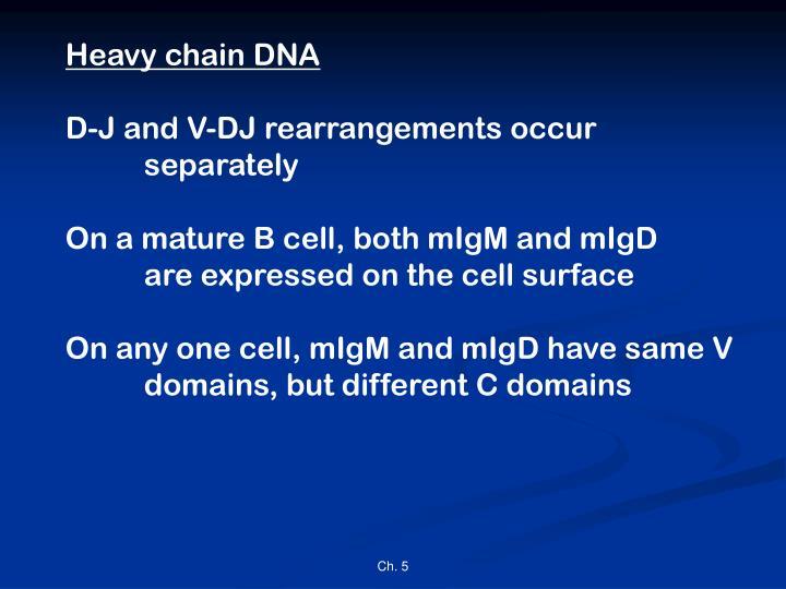 Heavy chain DNA