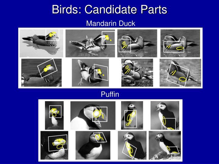 Birds: Candidate Parts