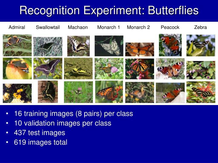 Recognition Experiment: Butterflies