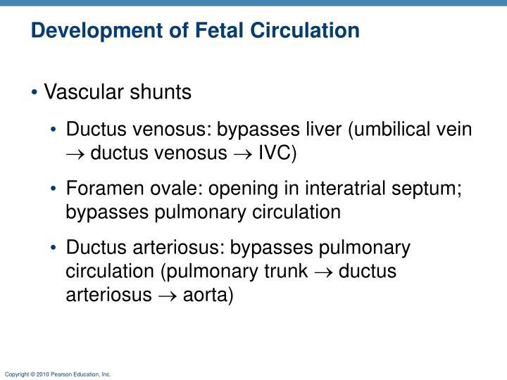 Development of Fetal Circulation