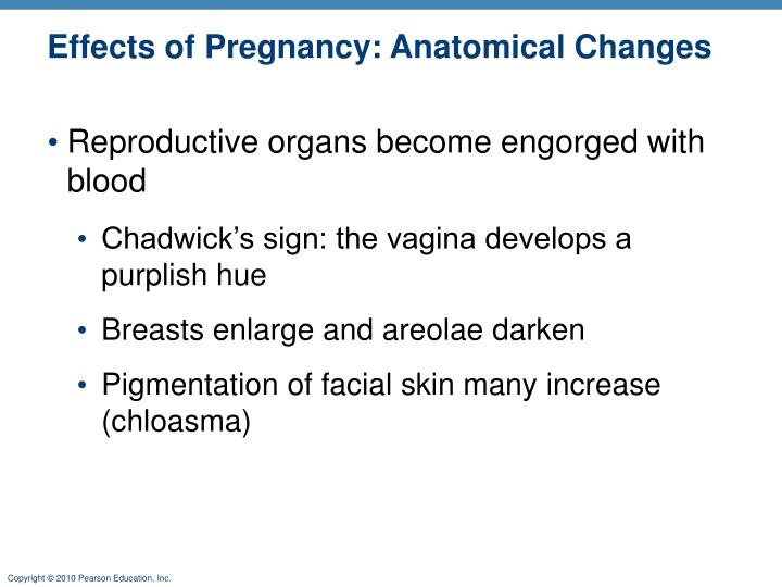 Effects of Pregnancy: Anatomical Changes