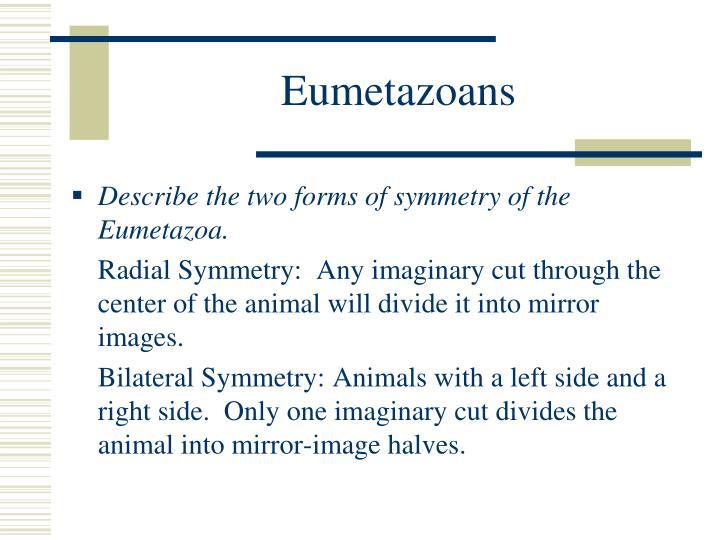 Eumetazoans