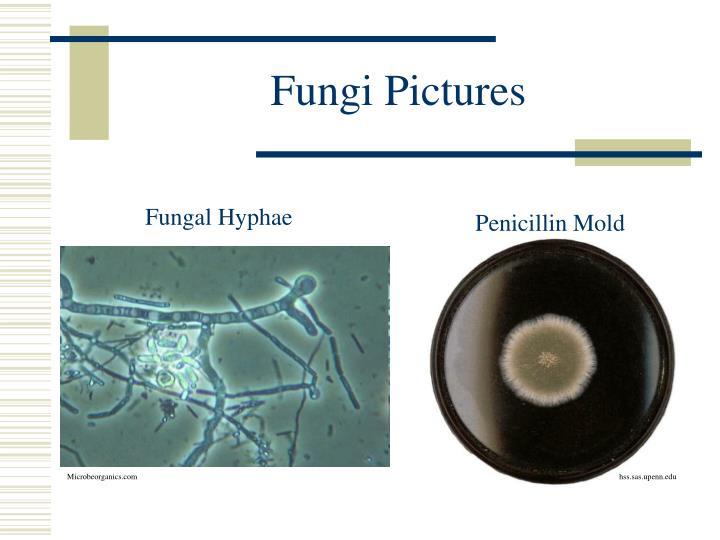 Fungi Pictures