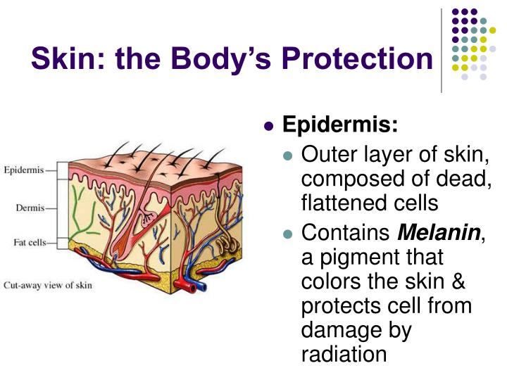 Skin the body s protection1