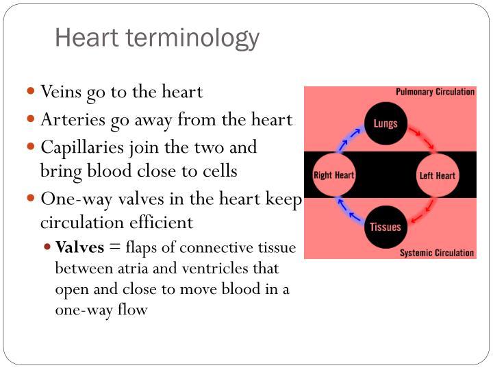 Heart terminology