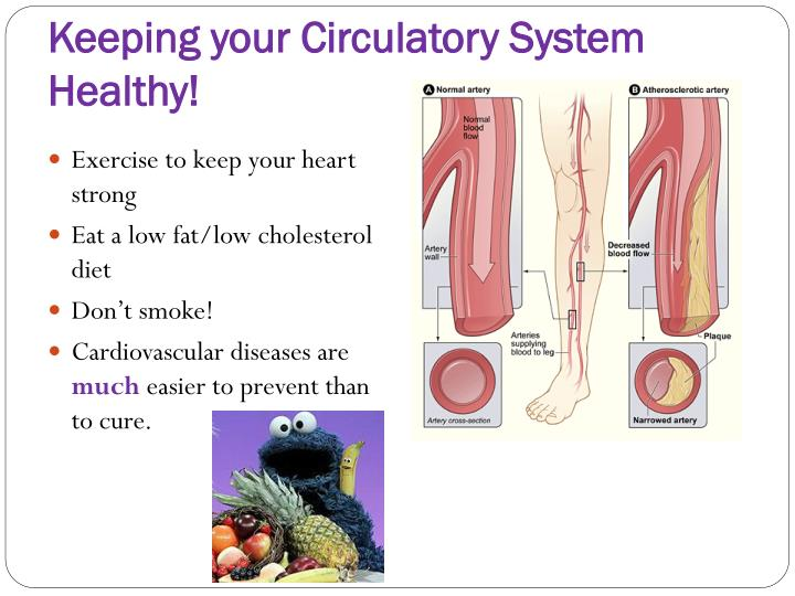 Keeping your Circulatory System Healthy!