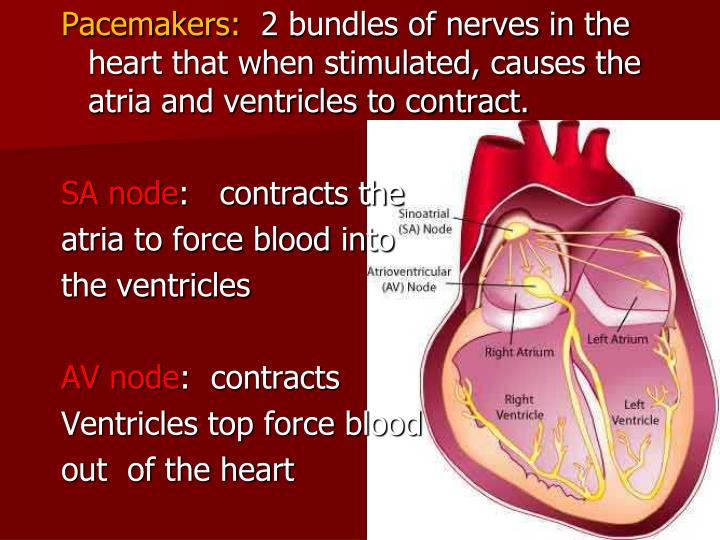 Pacemakers: