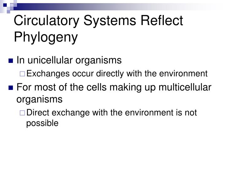 Circulatory systems reflect phylogeny