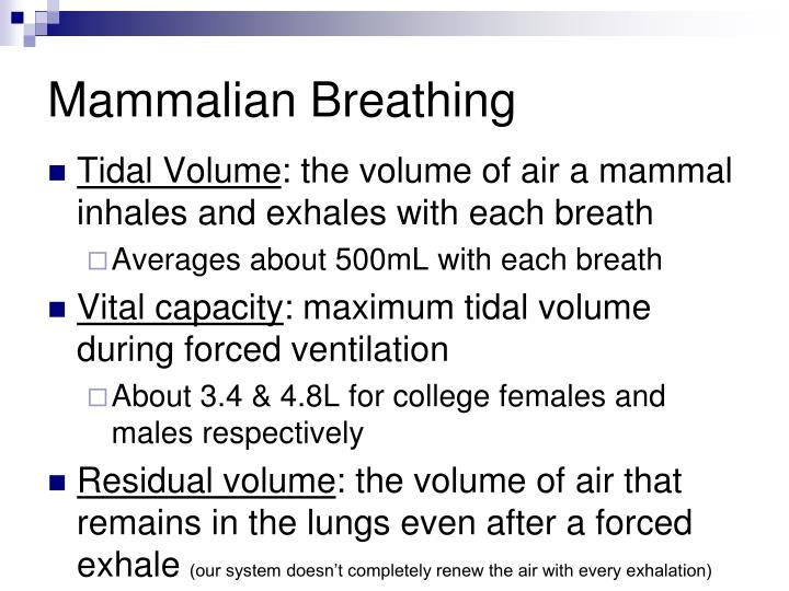 Mammalian Breathing