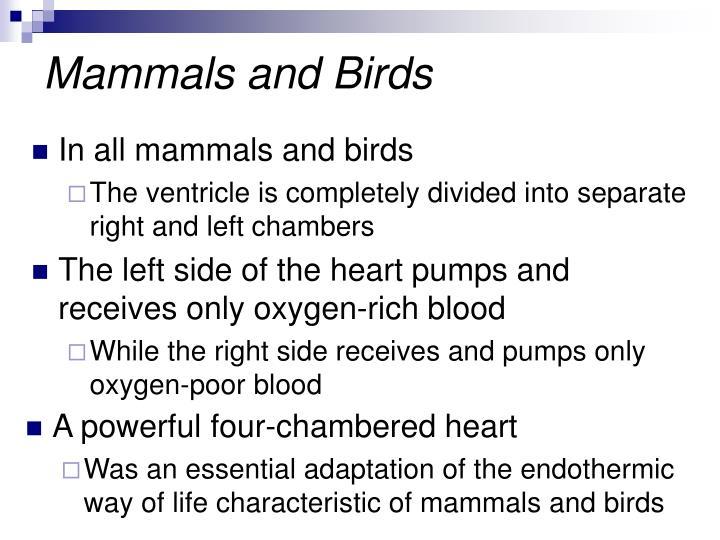 Mammals and Birds