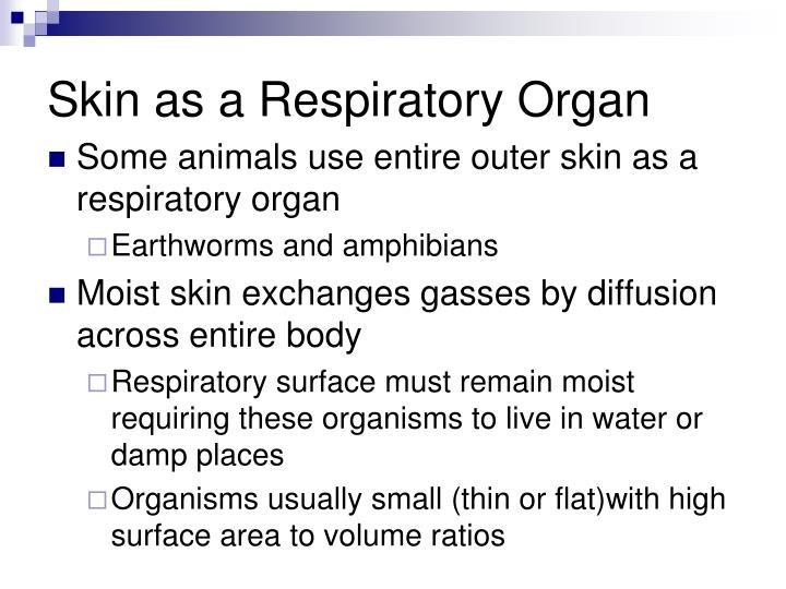 Skin as a Respiratory Organ