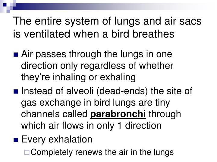 The entire system of lungs and air sacs is ventilated when a bird breathes