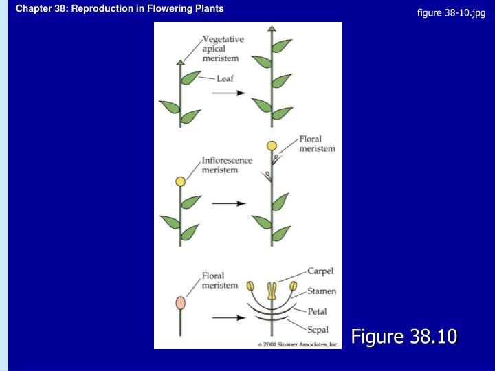 figure 38-10.jpg