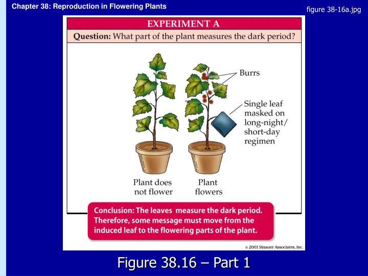 figure 38-16a.jpg