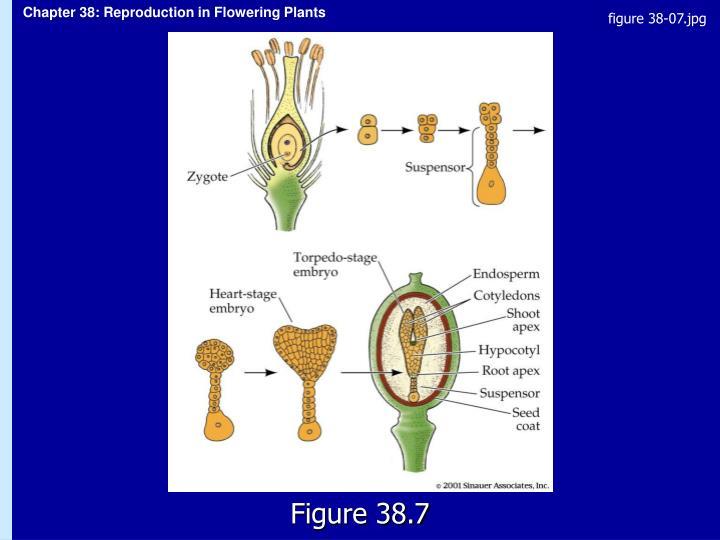 figure 38-07.jpg