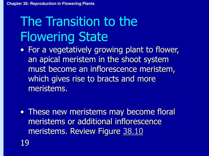 The Transition to the Flowering State