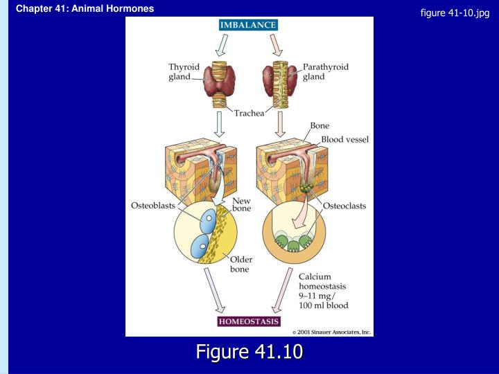 figure 41-10.jpg