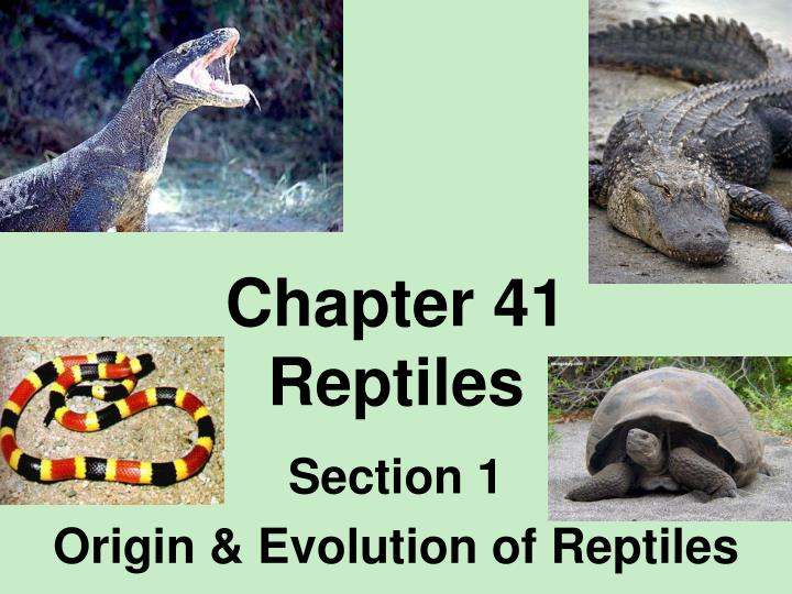 Chapter 41 reptiles