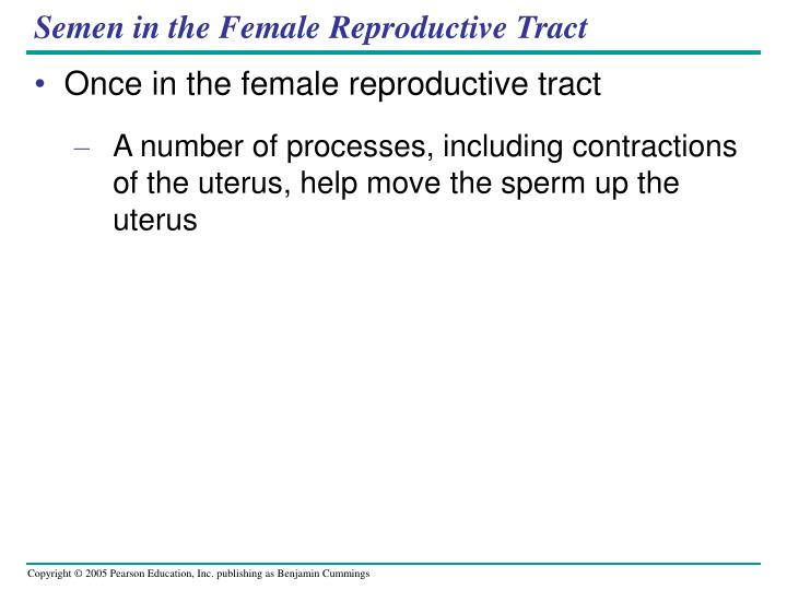 Semen in the Female Reproductive Tract