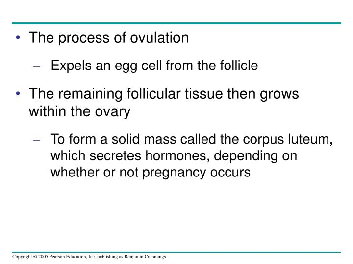 The process of ovulation