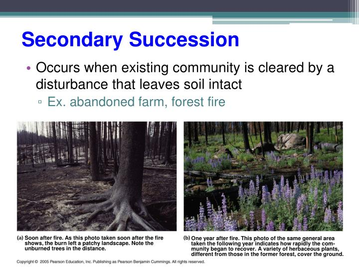 Secondary Succession