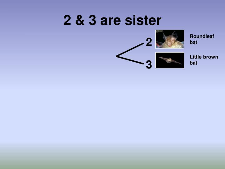 2 & 3 are sister