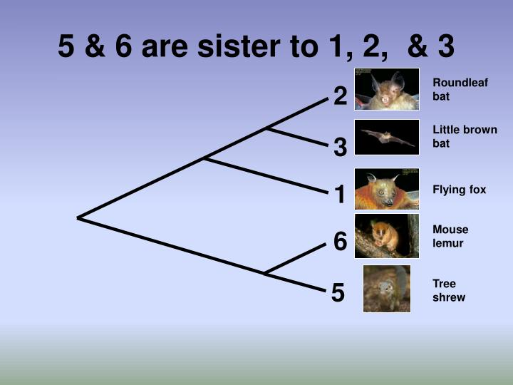 5 & 6 are sister to 1, 2,  & 3