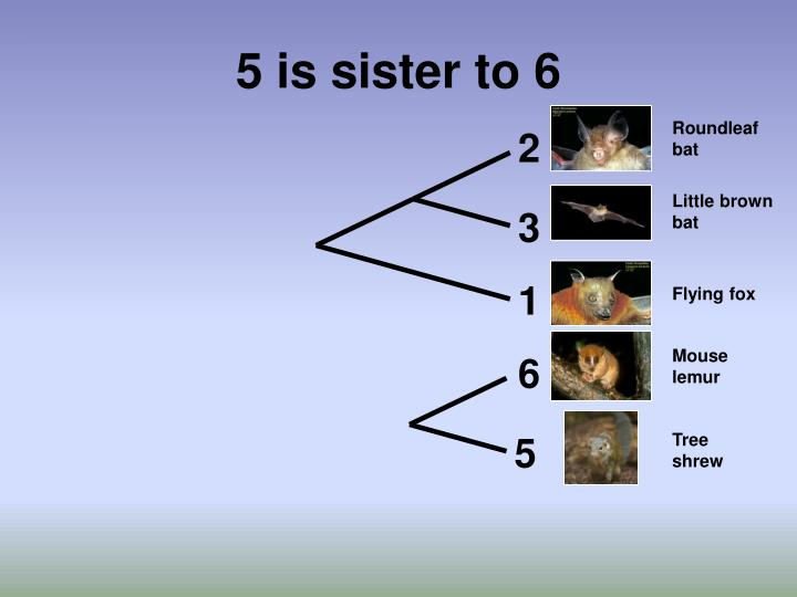 5 is sister to 6