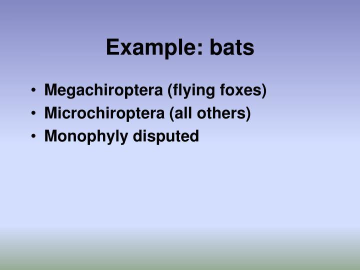 Example: bats