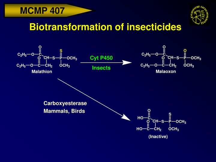 Biotransformation of insecticides