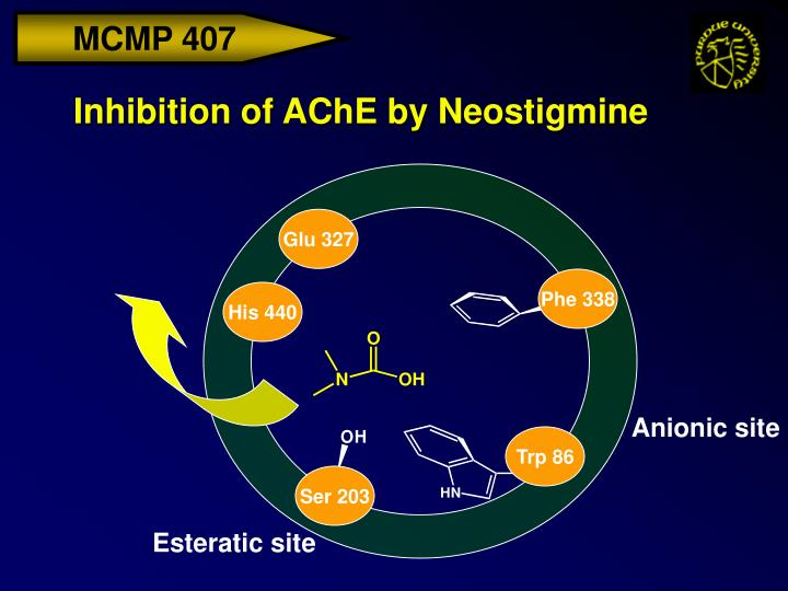 Inhibition of AChE by Neostigmine