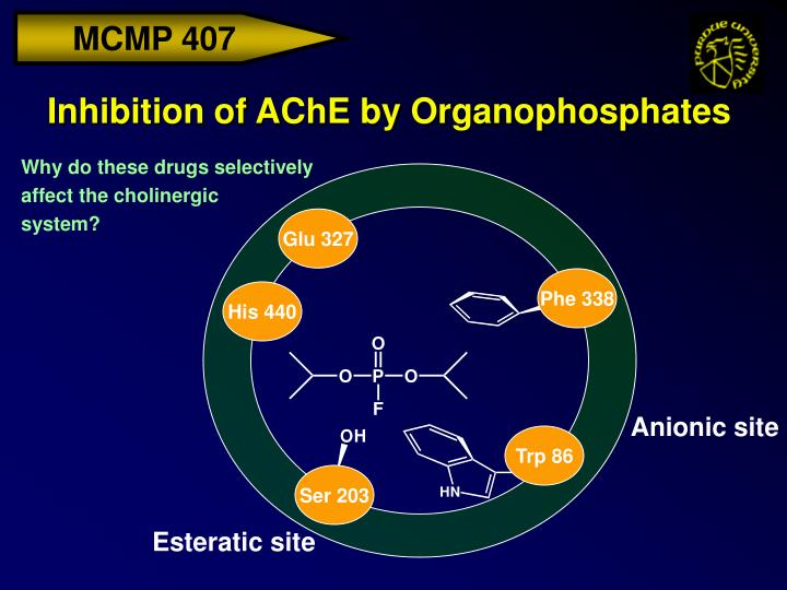 Inhibition of AChE by Organophosphates