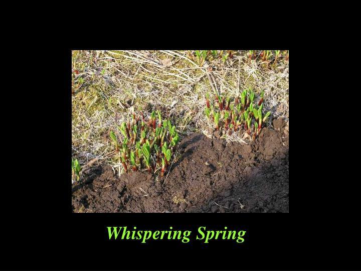 Whispering Spring