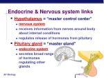 endocrine nervous system links