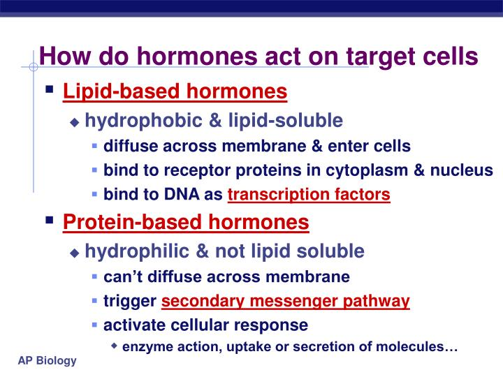 How do hormones act on target cells