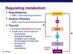regulating metabolism
