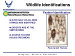 wildlife identifications