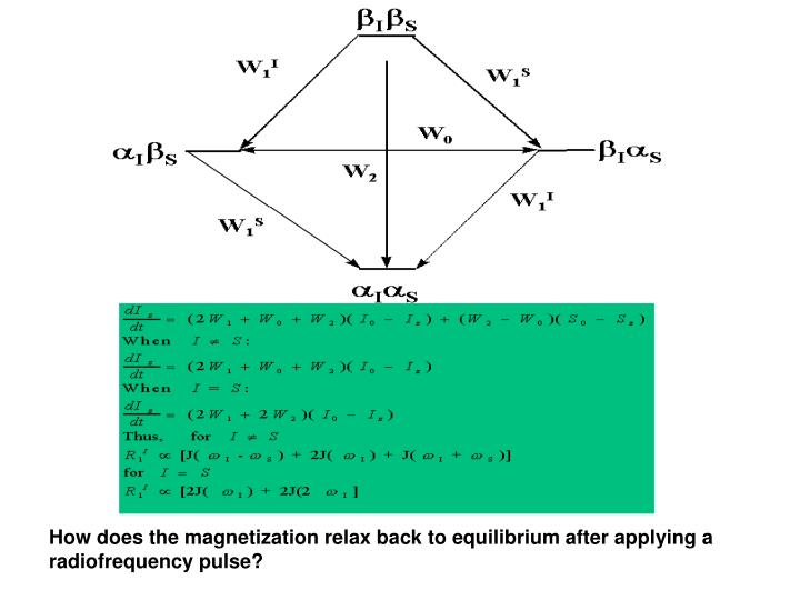 How does the magnetization relax back to equilibrium after applying a