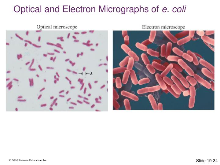 Optical and Electron Micrographs of