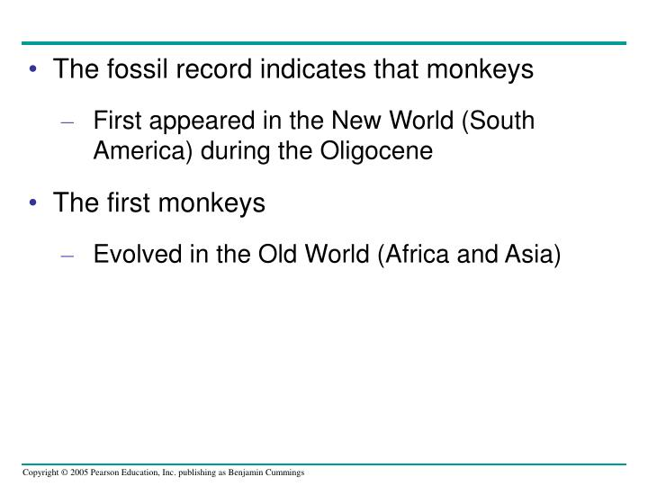 The fossil record indicates that monkeys