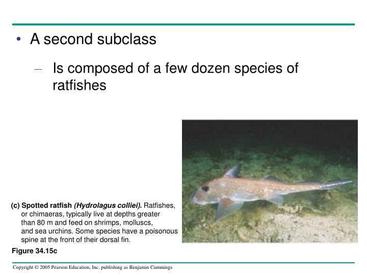 (c) Spotted ratfish