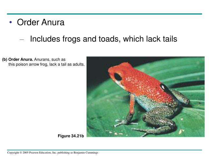 (b) Order Anura.