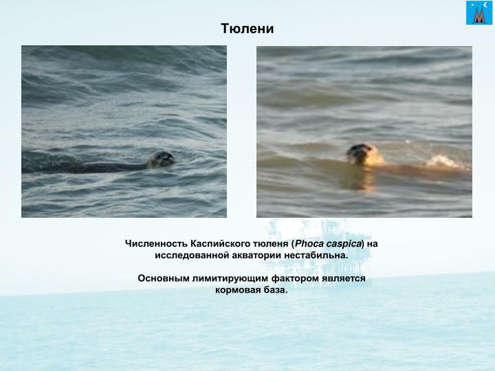 Тюлени