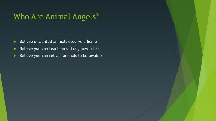 Who Are Animal Angels?