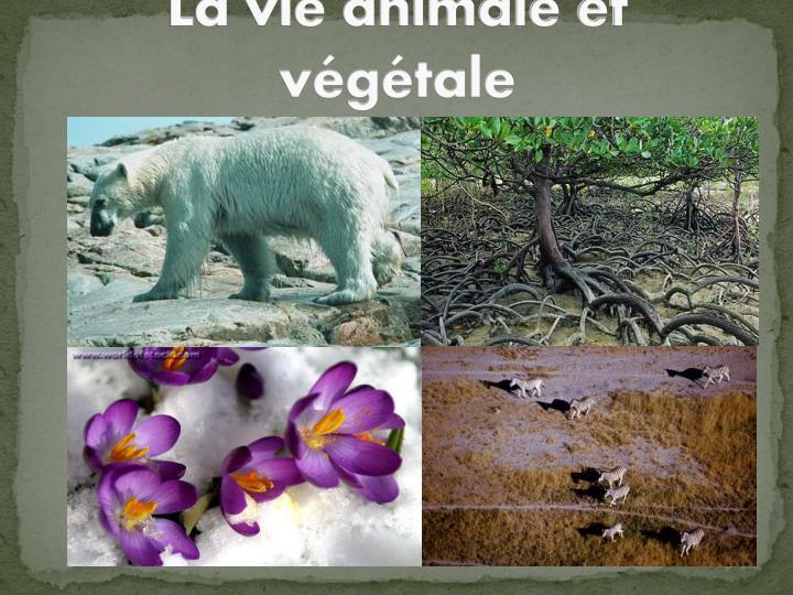 La vie animale et végétale